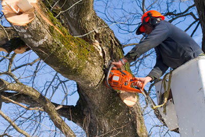 Professional Frisco, Texas Tree Services