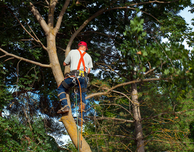 Professional Frisco, Texas Tree Service